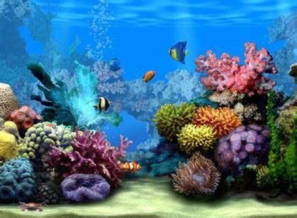 Welcher Meeresbewohner wärst du?