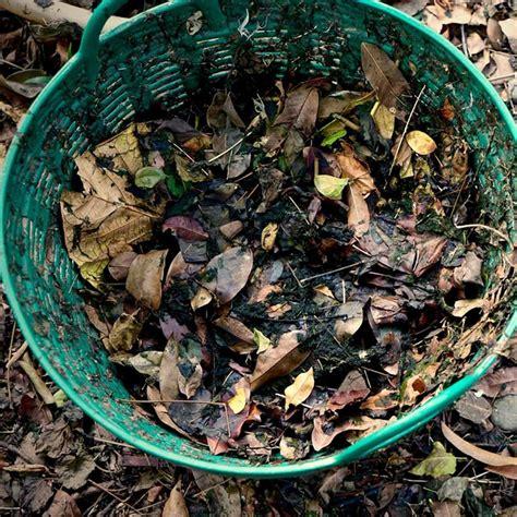 pile  leaves leaf compost