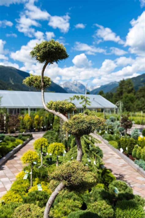 Garten Und Landschaftsbau › Baumschule Obojes