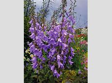 Perennials, Lavender and Shades on Pinterest