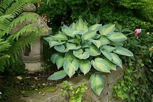 Schattenpflanzen Garten Winterhart : design 5001675 bodendecker schatten pflanzen ~ Lizthompson.info Haus und Dekorationen