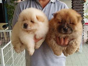 Malaysia Dog and Puppy Portal: Commercial: Dog & Puppies ...