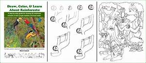 Amazon Rainforest Food Web Activity