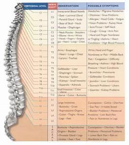 Cervical Spinal Nerves Diagram  U0026 Pinterest The World 39 S