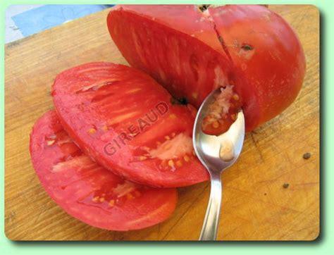 comment cuisiner le coeur de boeuf en tranche comment récolter les graines de tomates les dossiers fairesonjardin fr