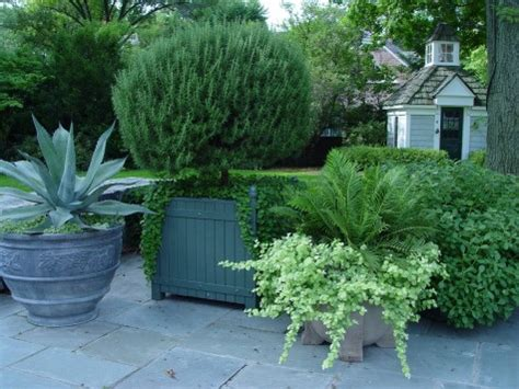 evergreens in containers dirt simple