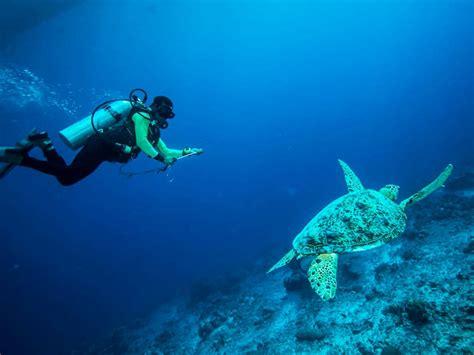 scuba diving tenerife surf life tenerife padi protec