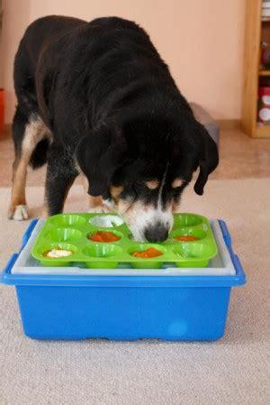schlemmertabletts aus silikon spass mit hund