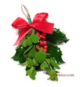 mistletoe and holly buy christmas mistletoe and holly online always fresh always the best