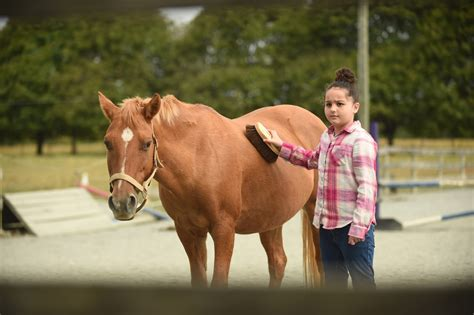 harford horses  therapy tools  people  mental