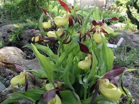 Raritäten Im Steingarten Orchideen