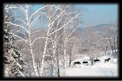 Farm Winter Around Animation Horses