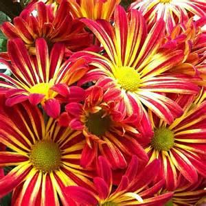 pretty fall flowers elisabeth bucci flickr