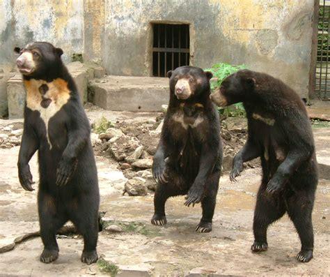 sun zoo animal bears cruelty indonesian abuse indonesia starves mistreated environment