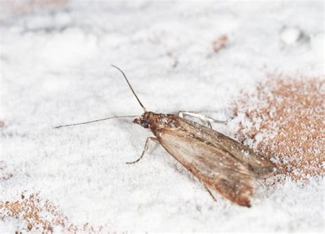 Active Pest Management