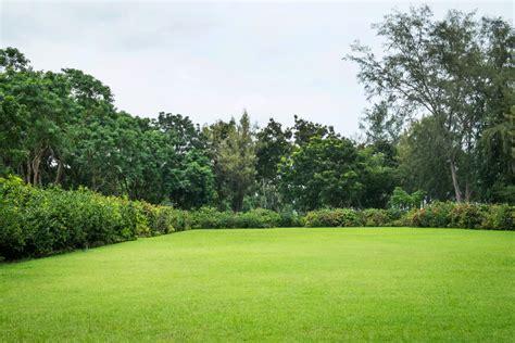 garden grass scientists unlock green energy from garden grass