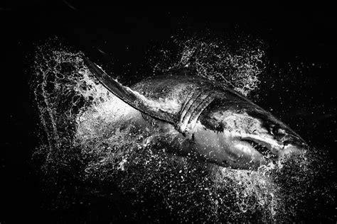 shark black  white  cliparts