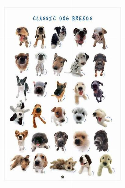 Dogs Breeds Dog Classic Types Poster Cat