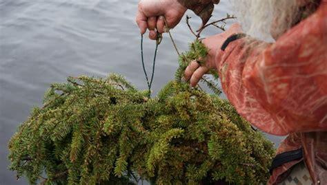 Zivju nārsta tiešraide no mākslīgās ligzdas: ūdens ...