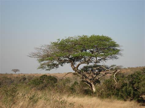 kostenlose foto landschaft natur huegel wind tierwelt