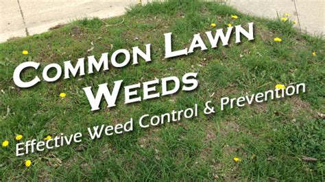 Weed Control Des Moines, IA: Common Lawn Weeds in Des ...