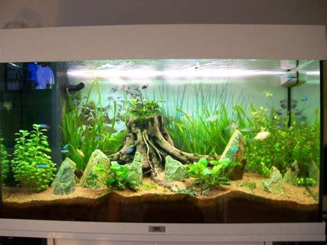 plante pour aquarium eau douce photo plante pour aquarium eau douce