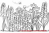 Coloring Garden Pages Flowers Flower Colouring Gardens Secret Spring Adult Template Printable Adults Theme Scene Therapy Colorful Landscape Templates Pattern sketch template