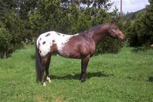 Pony Species