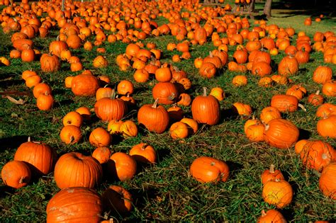 Pumpkin Patch Farms Mississippi by Pumpkin Patches Pick Your Own Pumpkin This Fall