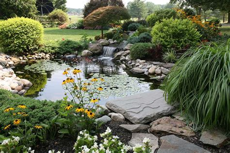 small backyard pond pictures 9 great plants for small backyard ponds