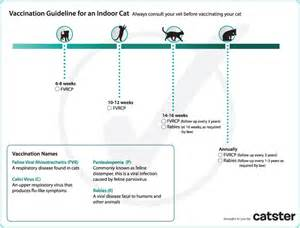 cats schedule cat vaccination guide catster