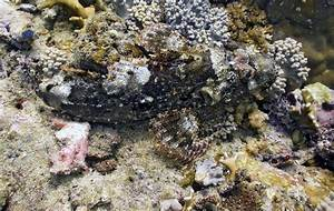 The gallery for --> Cuttlefish Camouflage