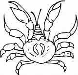 Crab Coloring Pages Printable Crabs Bestcoloringpagesforkids Preschool Coloringpages101 Paper Drawing sketch template