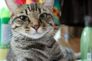 all about cats calling all cats rescues audio