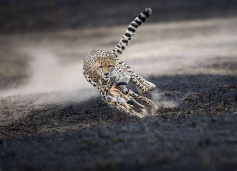 National Geographic Best Pictures by The Best Pictures Of 2018 By National Geographic 19 Pics