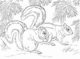 Squirrel Coloring Printable Scoiattolo Scoiattoli Squirrels Colorare Fox Disegno Mexican Adult Animal Sheet Sheets Supercoloring Disegni Immagini Animals Nature Volpe sketch template