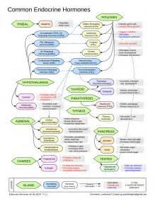 Endocrine Hormone Flow Chart