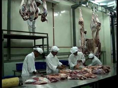 rph rjb abattoir rumah potong hewan rita jaya beef ponorogo youtube
