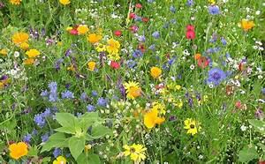 Blumen Im Juli : blumen march badische zeitung ~ Lizthompson.info Haus und Dekorationen