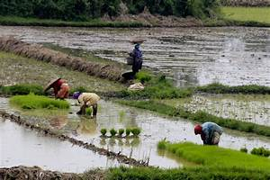 Employment shifts to rural areas in 2016: ADB - Business ...