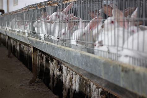 Animali In Gabbia - basta animali in gabbia ciwf italia