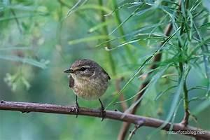 Kleine Vögel Im Garten : teneriffa ein paar kleine v gel naturfotoblog ~ Lizthompson.info Haus und Dekorationen