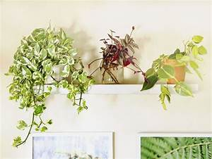 18 Most Beautiful Indoor Plants ( & 5 Easy Care Tips ...