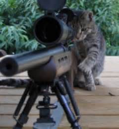 cat gun a question of