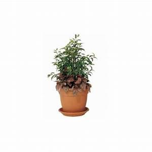 Grand Pot De Fleur Interieur : gros pot de fleur en plastique grand pot de fleur ~ Premium-room.com Idées de Décoration