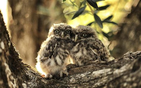 lovely owl windows  hd wallpaper preview wallpapercom