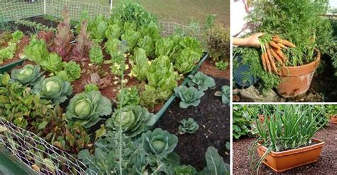 top  vegetables  growing  small gardens diet  life
