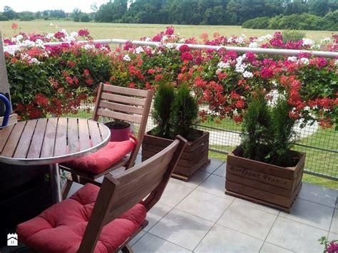 terrazzo e balcone piante per un balcone soleggiato homelook it