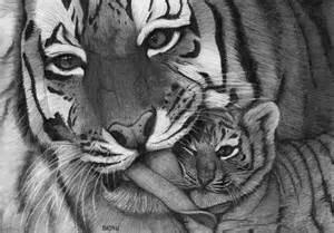 Easy Tiger Pencil Drawings