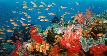 turquoise roses la couleur corail